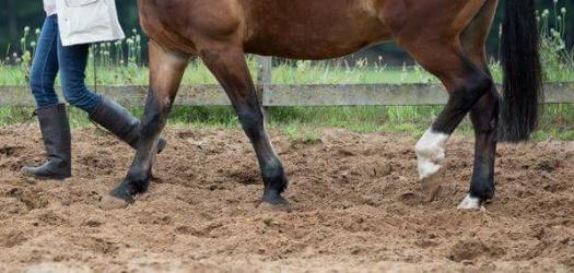 afbeeldingg van Coaching met Paarden