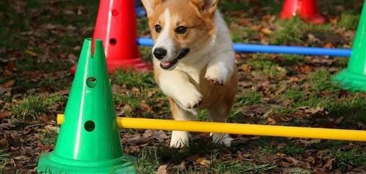 afbeeldingg van Puppy socialisatie workshop